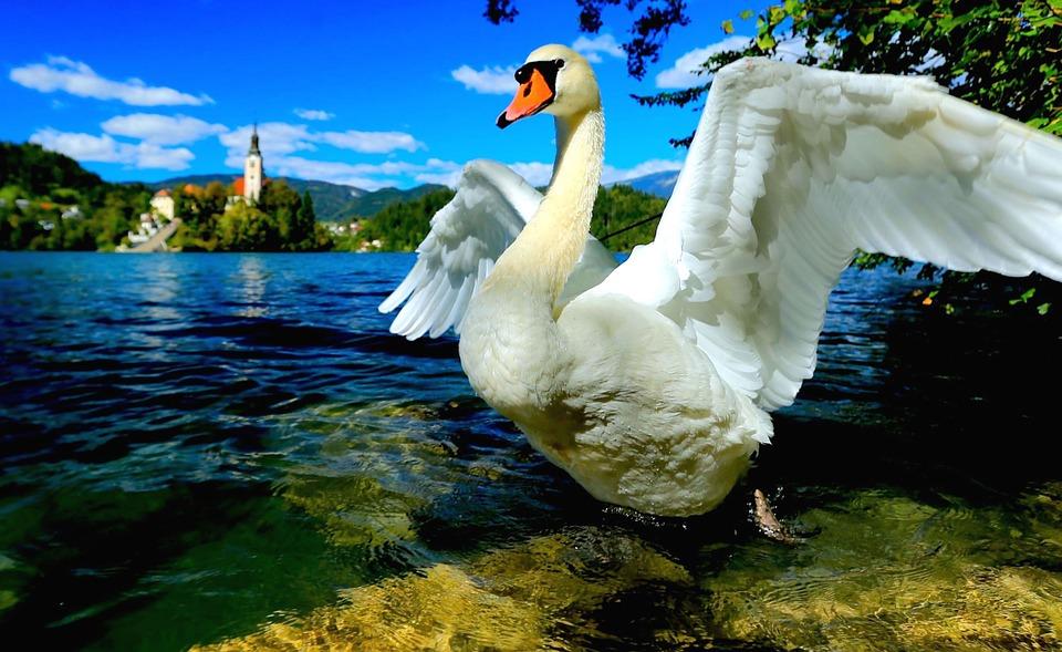 Лечебные курорты Словении!