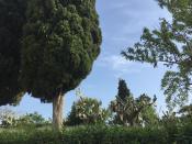 Тоже местные жители древней сицилийской земли - кактусы и др.