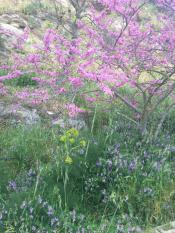 Вот такая весна на Сицилии