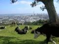 Панорама Окленда