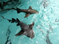 Знакомство с акулами