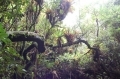 Облачный лес