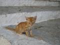 Котенок из города Линдос, автор: Ольга Емельянова, г.Набережные Челны