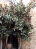 Буйная растительность Яффо