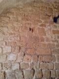 Гнезда строят прямо в стенах