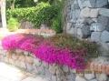 Цветы на о.Искья