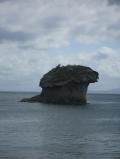 Гриб-своеобразный символ Искьи, произведение природы, г. Лакко Амено
