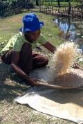 Женщина просеивает рис