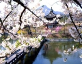 Дворец Кенбоккун в Южной Корее, автор: Наталья Савина, Нижний Новгород