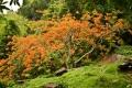 Красной акации ветка душистая… Ват Пху. VI в. Чампассак
