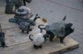 Птичий рынок в Риге