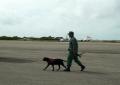 Охрана в аэропорту