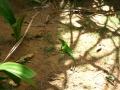 Фауна Ориноко