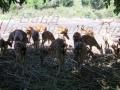 На ферме оленей