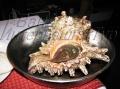 Морская улитка хороша в салате
