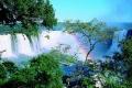 Деревья и радуга на фоне водопада Игуасу